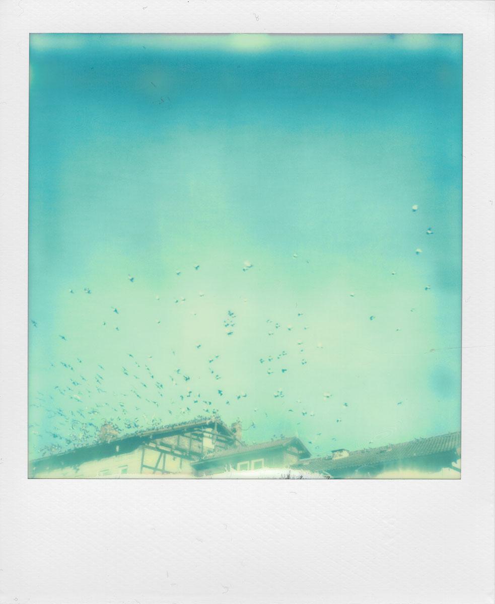 Die Tauben am Himmel (Polaroid)